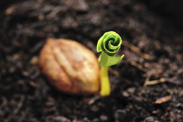 Обработка питательными веществами увеличивает энергию прорастания