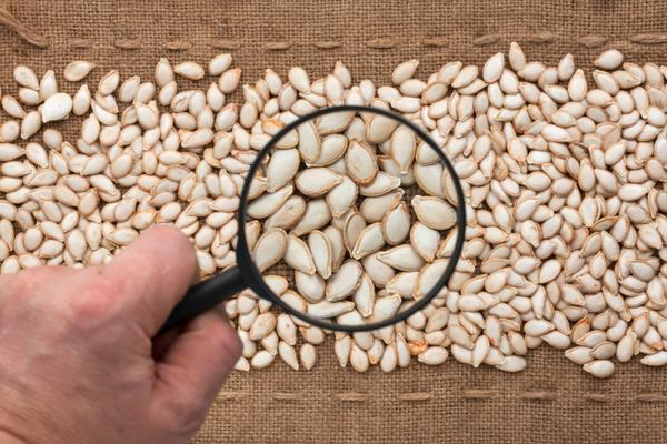 Выбирать семена нужно тщательно