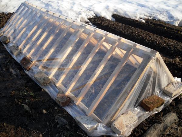 Парник из деревянных решеток очень прост в сборке