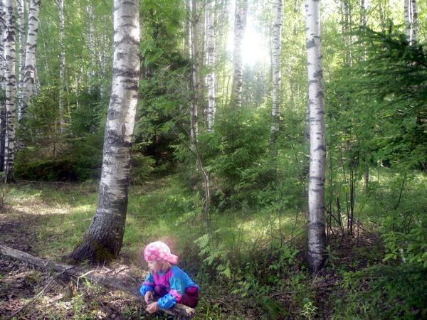В соседнем лесу полно грибов и ягод