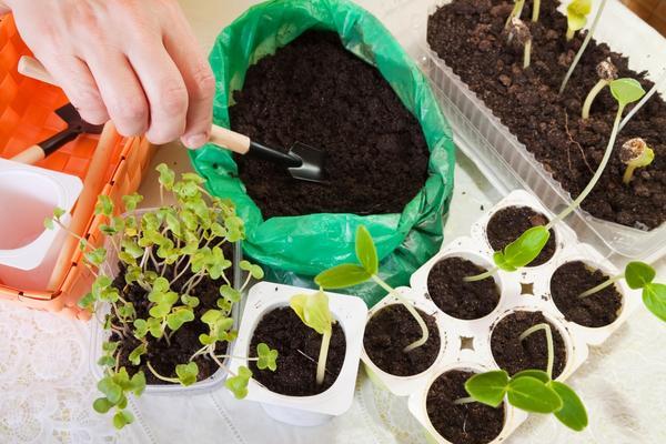 Рассаду можно сажать в разные емкости
