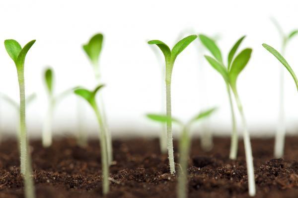 Чтобы семена дали всходы, им необходимо создать условия