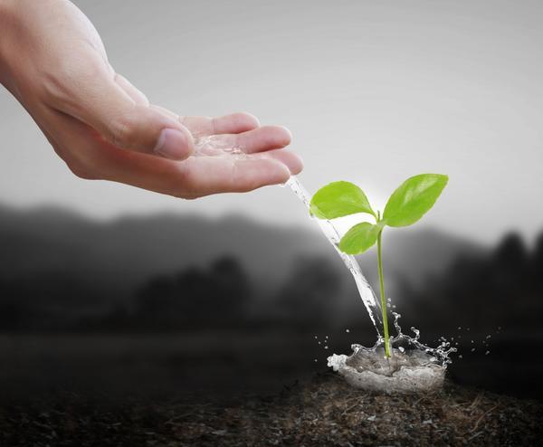 Растениям нужна не только вода, но и удобрения