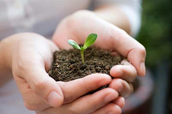 От того, какую почву мы выберем, зависит, какой будет наша рассада