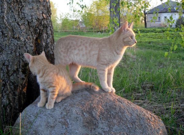 Коты - надежное средство от кротов