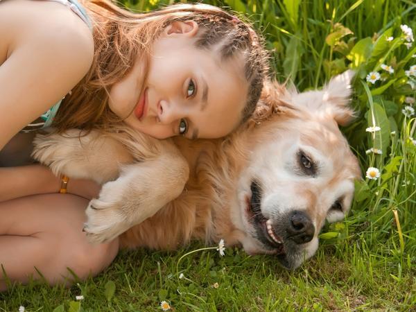 Не все собаки дружелюбны