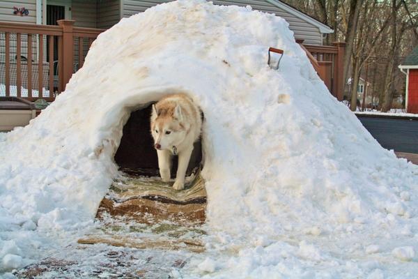 Снежная конура