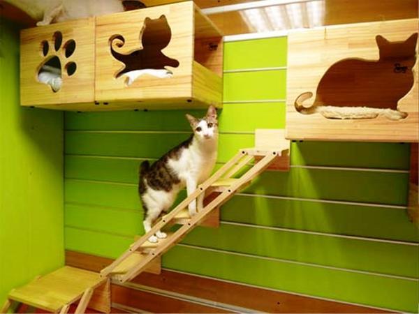 Кошачьи полочки, фото с сайта http://realhousedesign.com