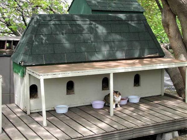 Кошачье общежитие, фото с сайта www.ontariopics.com