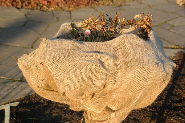 Мешковина - популярный материал для зимнего укрытия растений