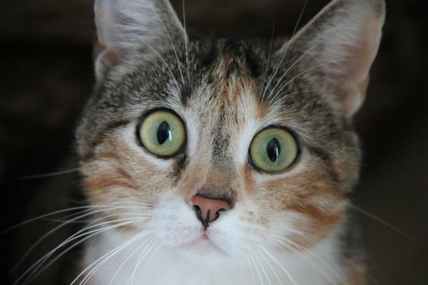 Кот, оставшийся бездомным, может не пережить зиму