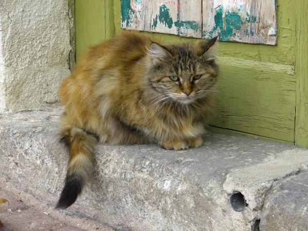 Потерявшегося кота, возможно, ищут хозяева - помогите им встретиться