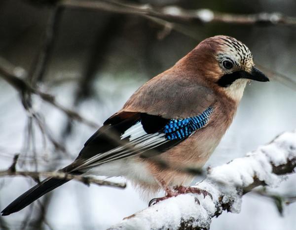Птицам зимой нужна наша помощь