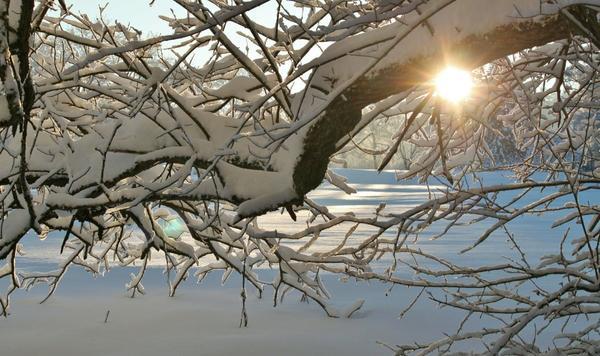 Когда снега на ветвях становится слишком много, они могут сломаться