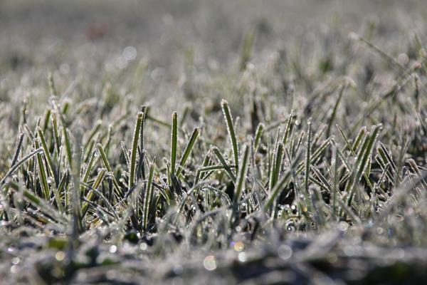 Чуть припорошенная снегом трава - не повод радоваться