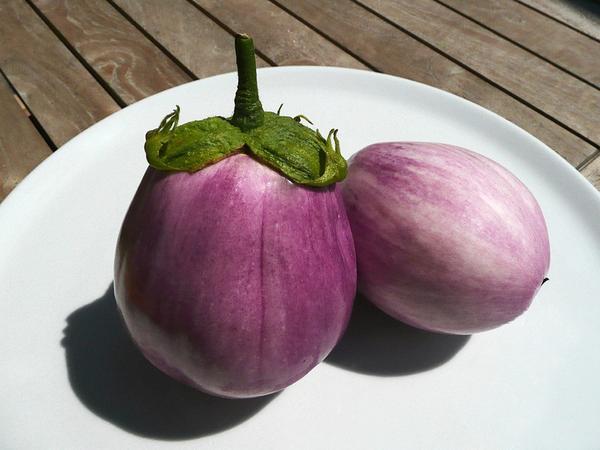 Современные сорта и гибриды баклажанов имеют разнообразную окраску и форму плодов