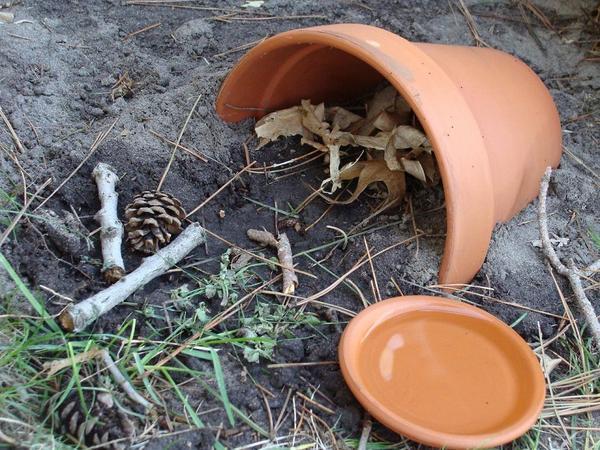 Домик для лягушки, фото с сайта lifeglobe.net