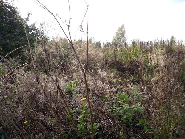 Где-то там, в этой траве прячутся кусты смородины...