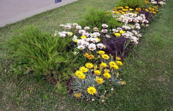 Бордюр из цветов и кустарников