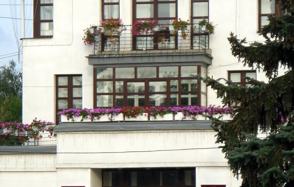 Балконы ярославской мэрии тоже украшены петуниями