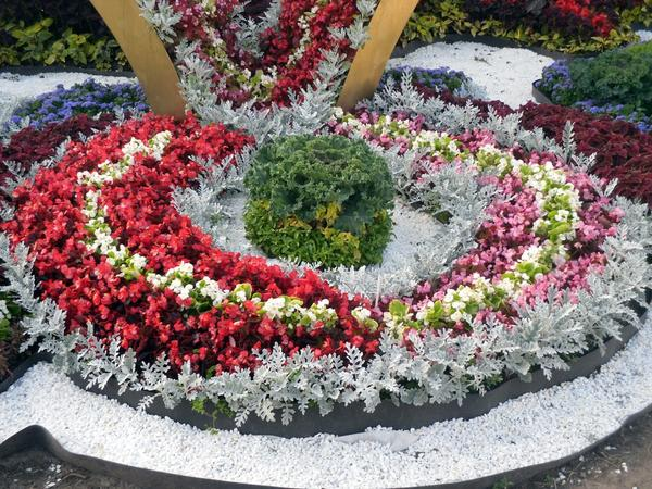 Композиция с декоративной капустой