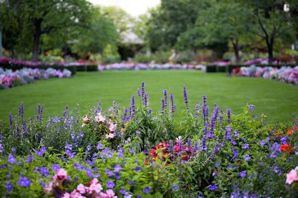 Добиться непрерывного цветения проще, если клумбы обширные