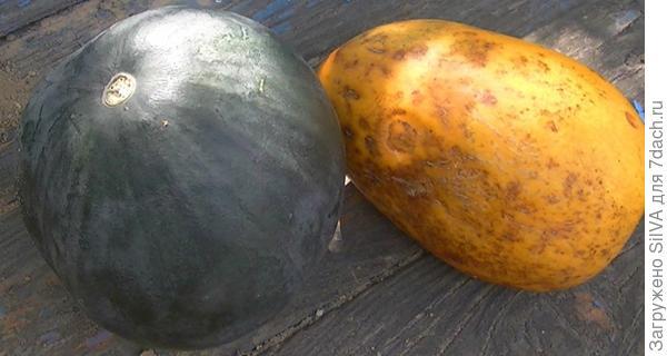 арбуз и дыня