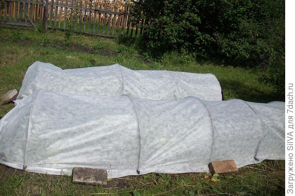 укрытие растений нетканым материалом плотности 42г/м2