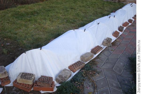 укрытие роз лутрасилом плотности 60г/м2 в 2 слоя