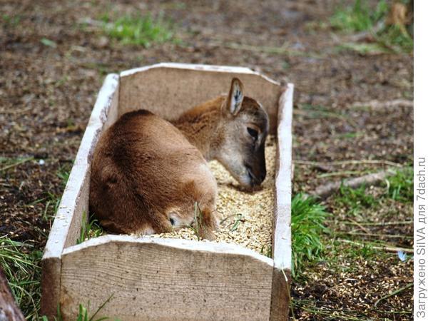 малыш олененок