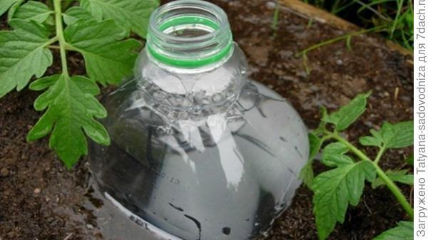 глубокий полив с помощью пластиковых бутылок, фото с просторов интернета