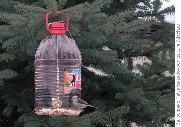кормушка для птиц из пластиковых бутылок, фото с сайта abekker.ru