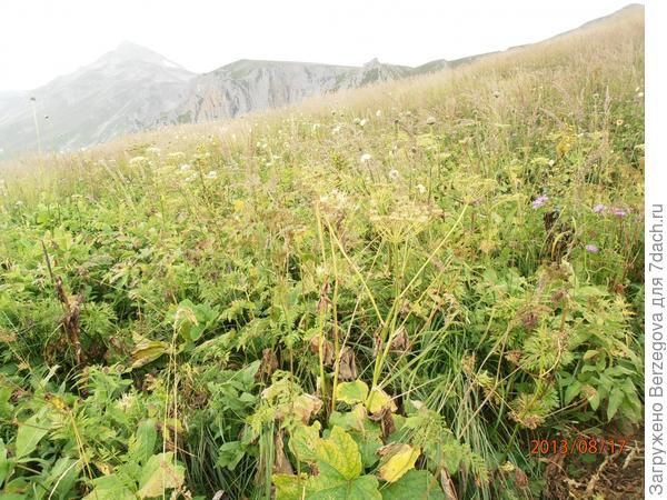Красоты и растительность Кавказского Биосферного заповедника. Плато Лаго-Наки и гора Оштен.