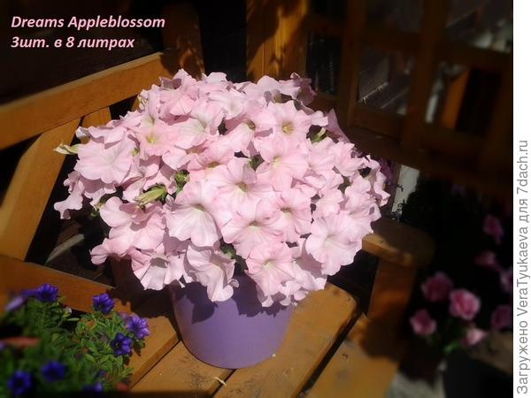 http://flower.wcb.ru/index.php?s=f2e664980ba93e2fd97d87daa2bc56e2&act=attach&type=post&id=44236