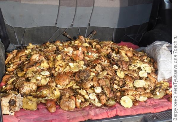 Это остатки после одаривания родственников грибами.