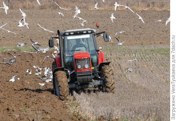 Трактор весной запахивает стерню в поле.