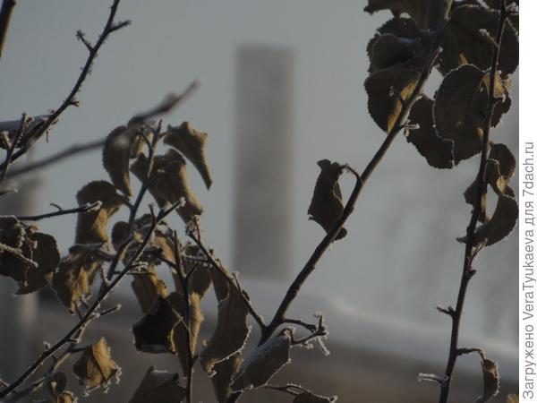 Это не туман, который бывает иногда, по погоде. Это туман от выбросов газового котла, водяной пар.