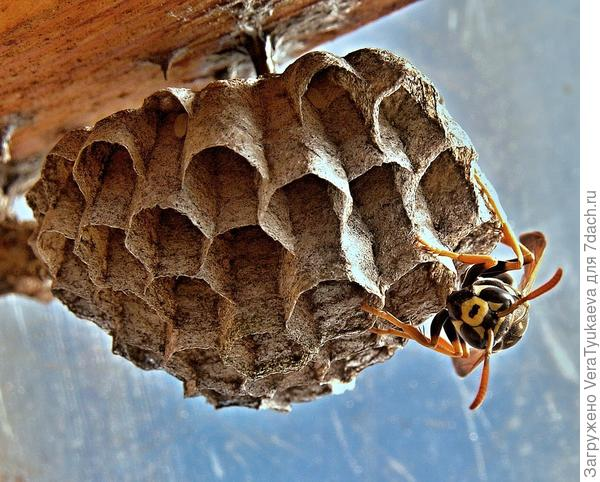 Осы тоже боятся дыма? Тогда это замечательное средство для отпугивания ос от гнезд.