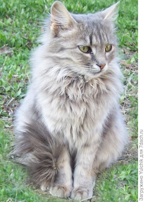 У нас во дворе коты-двойняшки: кот и кошечка - Василий и Мария, но не особо чванливые и на Ваську и Машку отзываются охотно. Это, кажется, Мария...