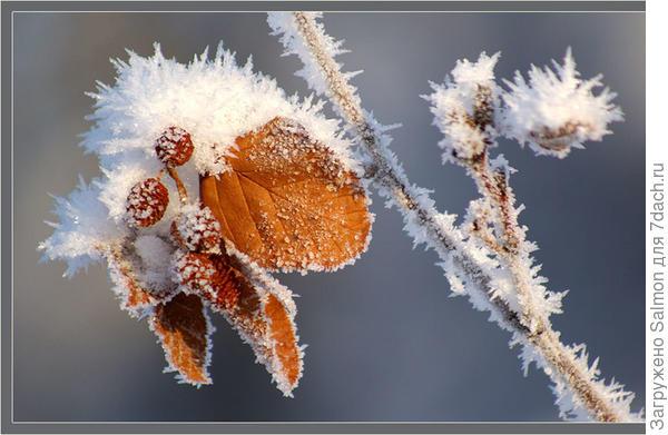 Ольха зимой. Фото с сайта mediasubs.ru