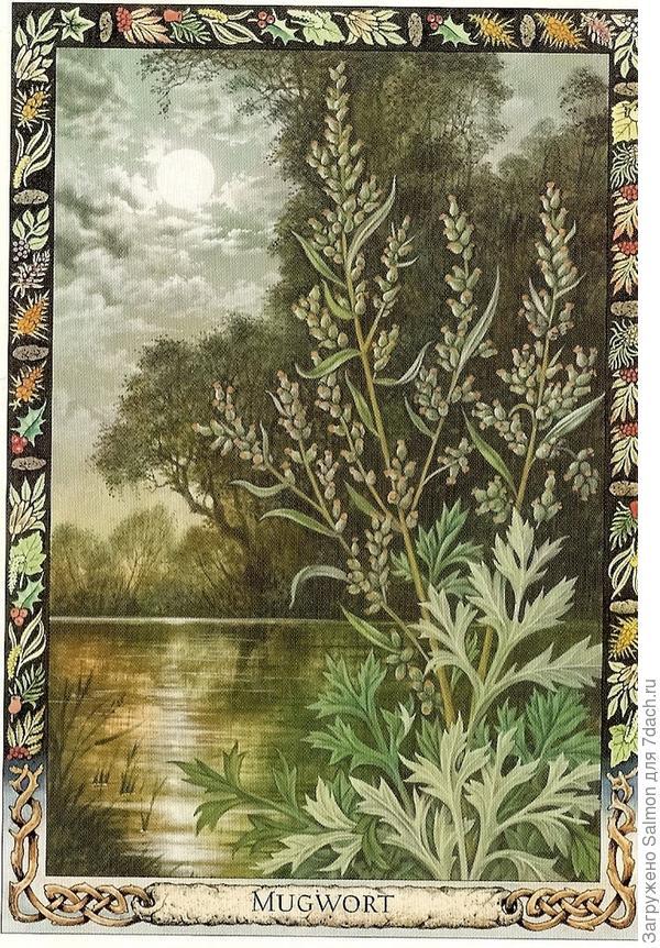 Полынь - почитаемое растение друидов