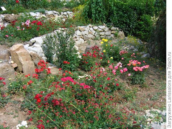 Розы и камни - диссонанс на лицо