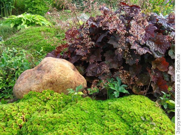 Более половины места отдается в рокарии почвопокровным растениям