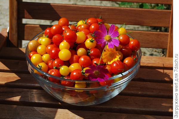 Томаты черри красные и желтые в миске