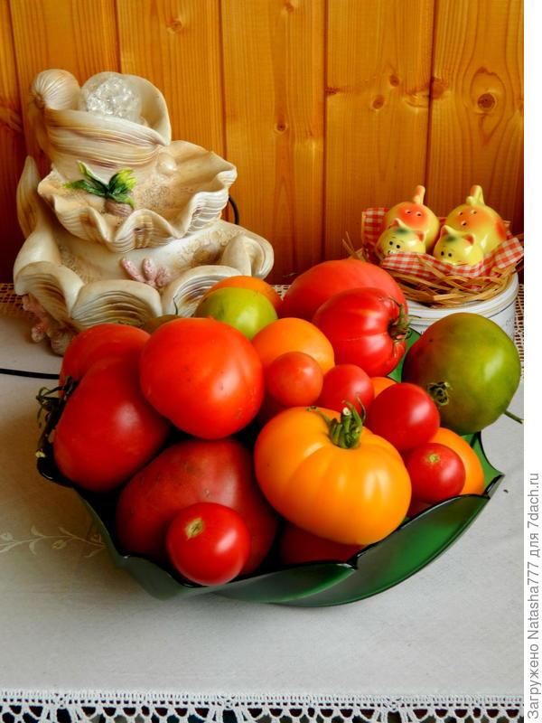 помидорчики