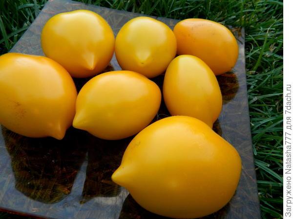 солнечные лимончики