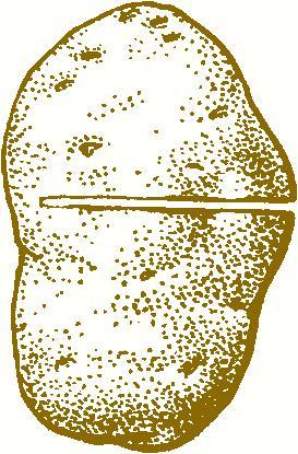 Поперечный разрез клубня. Фото с сайта board74.ru