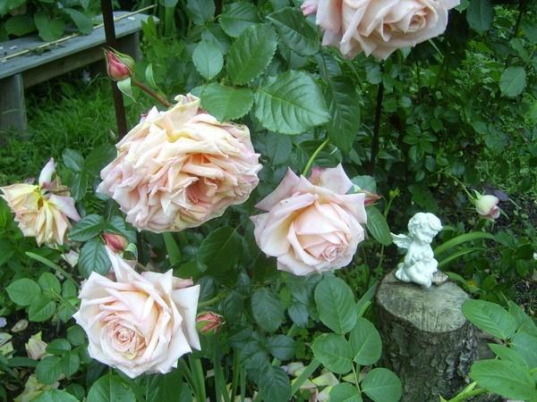 Увядающие цветы надо удалять. Фото взято из журнала lukor, сайт 7Dach.ru