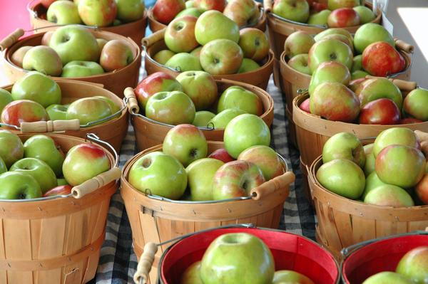 Яблоки можно хранить простой укладкой