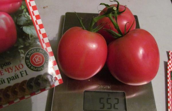 Правила конкурса 100 000 руб за самый большой помидор